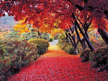 錦織り成す園内をめぐり、カエデの美しさを堪能したい