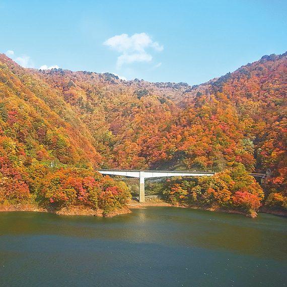 ボートツーリングの乗り場から車で約5分。『長井ダム管理支所』の北側は、ダムに向かって叫ぶといろいろな方向から声が返ってくる「ヤッホーポイント」!紅葉の絶景に囲まれて、大きな声で叫んでみよう