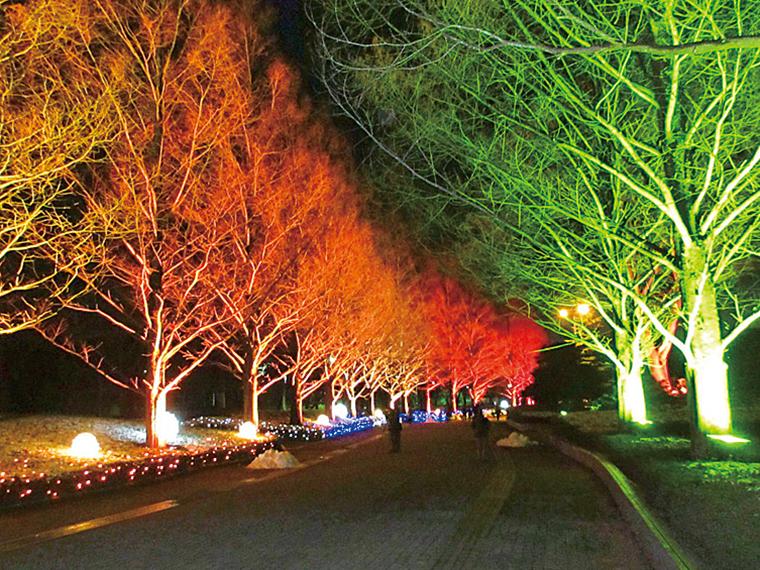 カラフルな光で、「あづま総合運動公園」の木々の力強い姿をさらに輝かせる
