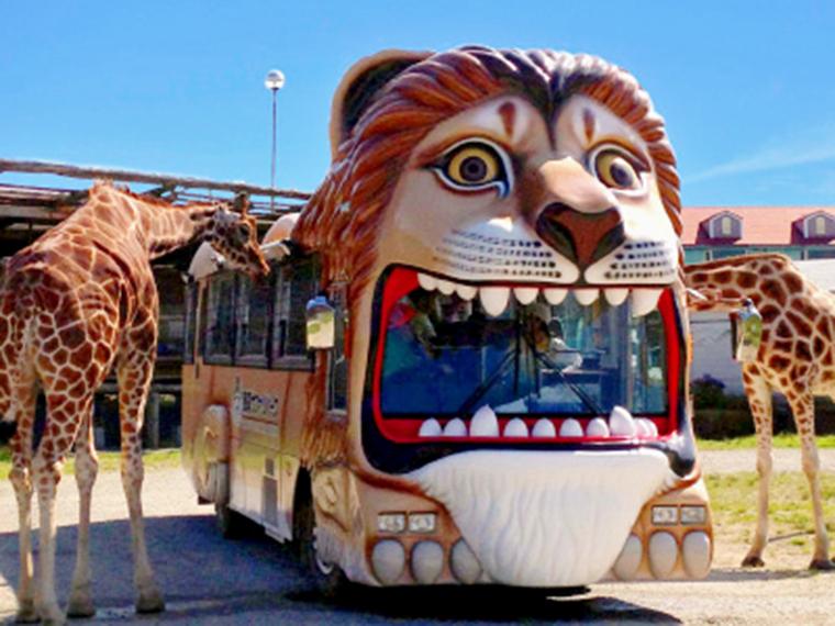 キリンやゾウへのエサやりが楽しいライオンバス