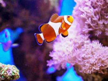 カラフルな海洋生物たちが住む小さな海の街