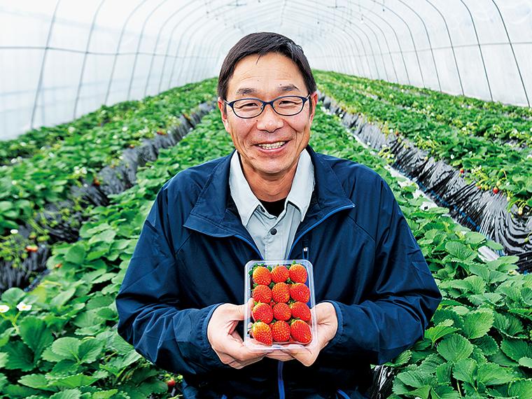 イチゴ農家の鈴木 治さん。イチゴの成長を促進するため、暖気を送るチューブを地面に設置。光合成を促すよう炭酸ガス発生装置もつけるなど、上質なイチゴをつくるため独自の工夫を矢祭町の各農家が行っているという