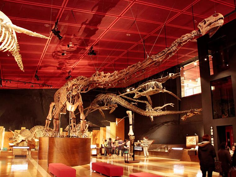 音と照明に工夫を凝らした化石展示室