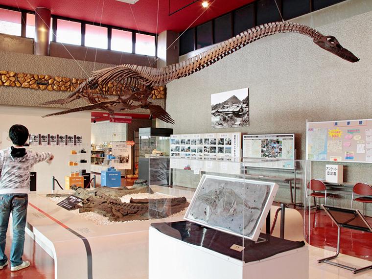 エントランスに展示されている「フタバサウルス・スズキイ」