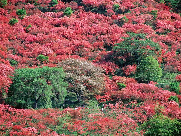 春には全山を美しい紅色に染め、昭和63年には「福島緑の百景」、平成19年には「福島遺産百選」にも選ばれた