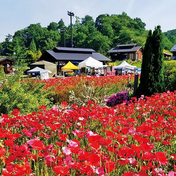 5月下旬頃から、多彩な種類のポピーが斜面に広がる花畑一面を埋め尽くし、壮観な光景が広がる
