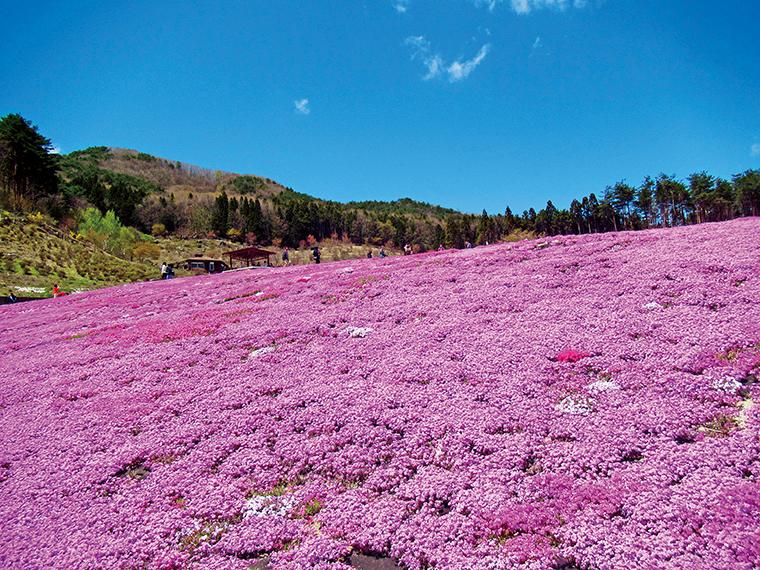 広大な敷地内に9種の芝桜が織りなす絨毯は、福島県内有数の絶景スポット。東京スカイツリーと同じ高さ634mの場所につくられた展望デッキや伝統文化等保存伝習施設「樹里庵」(入場無料)もある