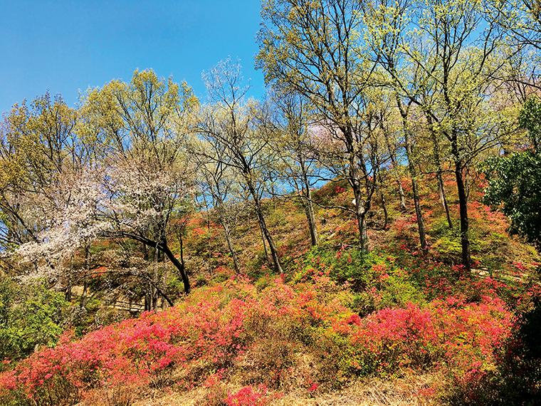 勾配がなだらかで歩きやすい散策路。四季折々に豊かな表情を見せる里山を愛でながら、のんびりとした時間を過ごすことができる