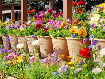 春は花いっぱいの柴田町へ!夜はライトアップや星空観賞会も