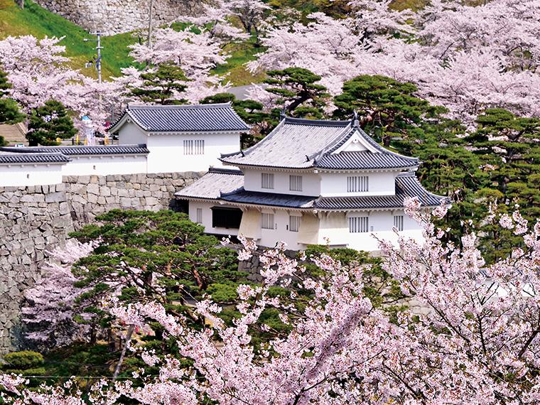 ソメイヨシノを中心に数多くの桜が咲き誇る「日本さくら名所100選」の一つ。桜が霞のように城山を覆うことから「霞ヶ城」の名が付いたとも言われている