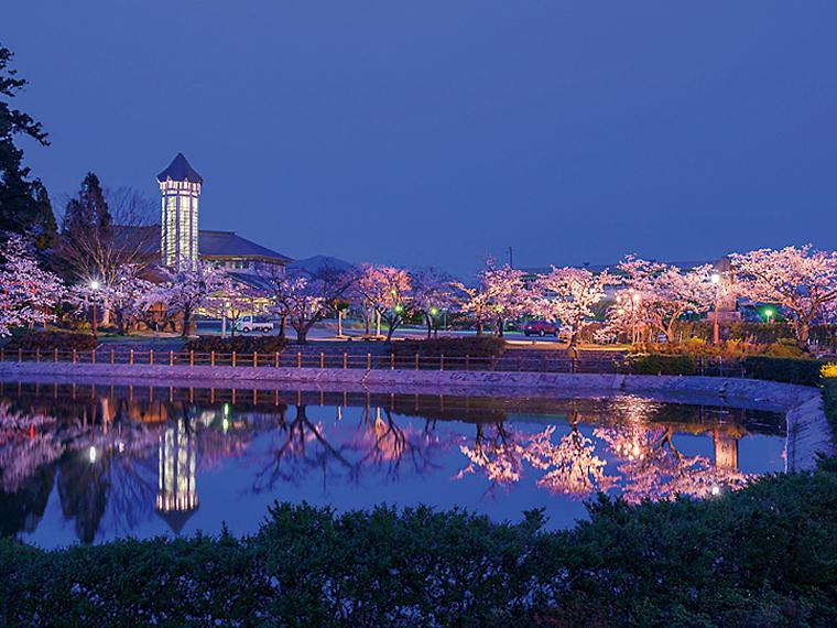 昼は淡い桃色と緑のコントラスト。夜はライトアップされた夜桜と、ため池に反射する様子が美しい