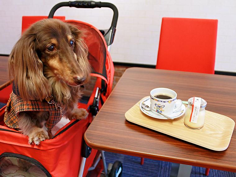 併設のカフェは宿泊しなくても利用が可能