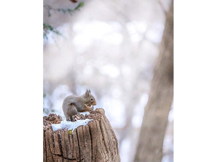 『水林自然林』@vivia2454