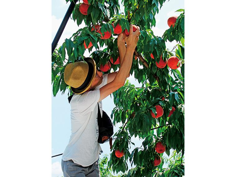 甘い香りが漂う園内。好みのモモを見つけ、その場で実を切り分け味わえる