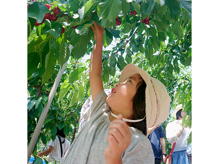 福島県北のフルーツ狩りや旬の果物、果物を使った商品の写真を応募しよう