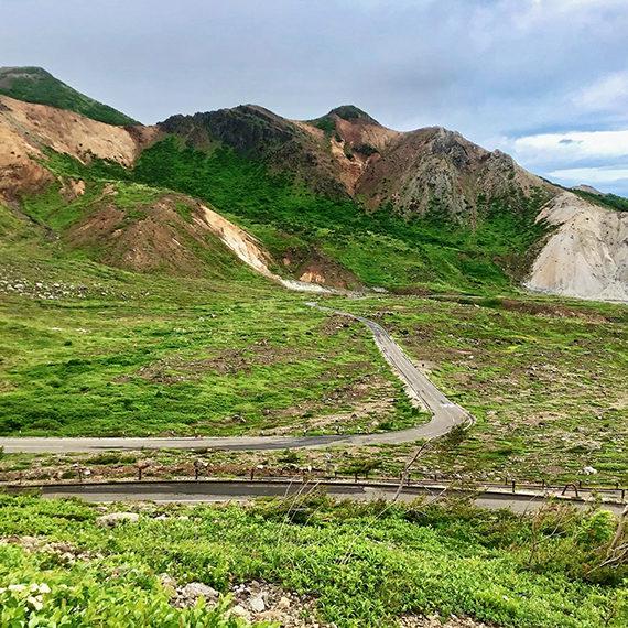 浄土平湿原の高山植物も必見