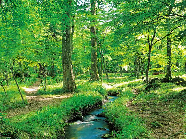 水林自然林・荒井堰(福島市)