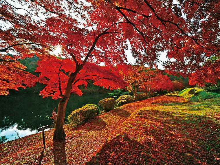 晩秋には「敷き紅葉」も楽しめる。9月は秋バラも見事
