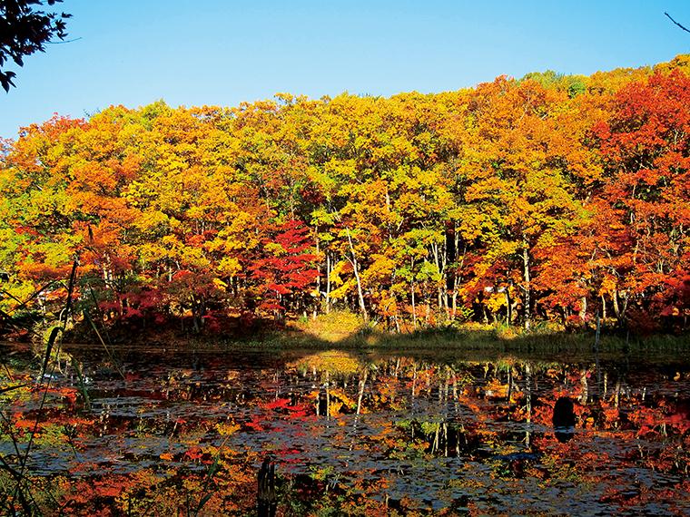 約8万年前に形成されたと伝わる「矢ノ原湿原」。約280種もの植物が生育している。1周約40分の遊歩道も整備され、紅葉を眺めながらのハイキングがおすすめ(写真提供/昭和村)