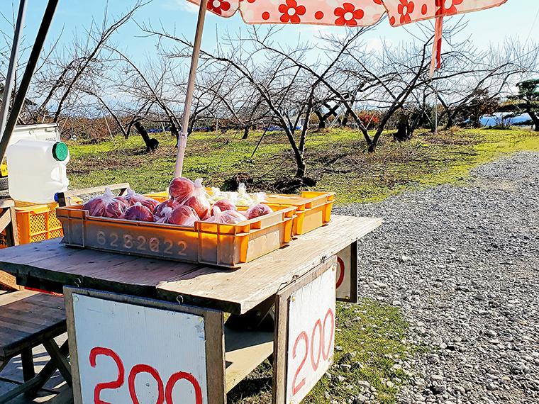 無人販売を見つけるコツは、果物畑近くのいかにも農家っぽい住宅の近くを車で走ること。夕方には商品がなくなりがちなので、午前中がおすすめです(リンゴだと3~4個で200円が一般的ですが、中には100円のところも!)