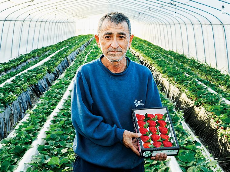 「そらの社」代表の金澤孝幸さん。20年にわたり研究してたどりついた上質な土壌で大粒の甘いイチゴを育てる。地面にはイチゴの成長を促進するために暖気を送るチューブを設置する工夫も。大粒の美しいイチゴは贈り物にもおすすめ