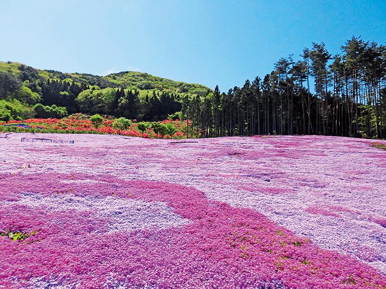2020年休園したこの絶景を愛でに2年ぶりに訪れては。東京スカイツリーと同じ高さ634mの場所につくられた展望デッキや伝統文化保存伝承施設「樹里庵」もある