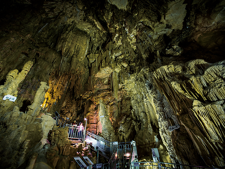 洞窟内最大のホール「滝根御殿」をはじめ「竜宮殿」や巨大石筍「クリスマスツリー」などがある。洞窟内は年間を通じて15℃前後とおだやかな温度に保たれており、ワインセラーも設置されている
