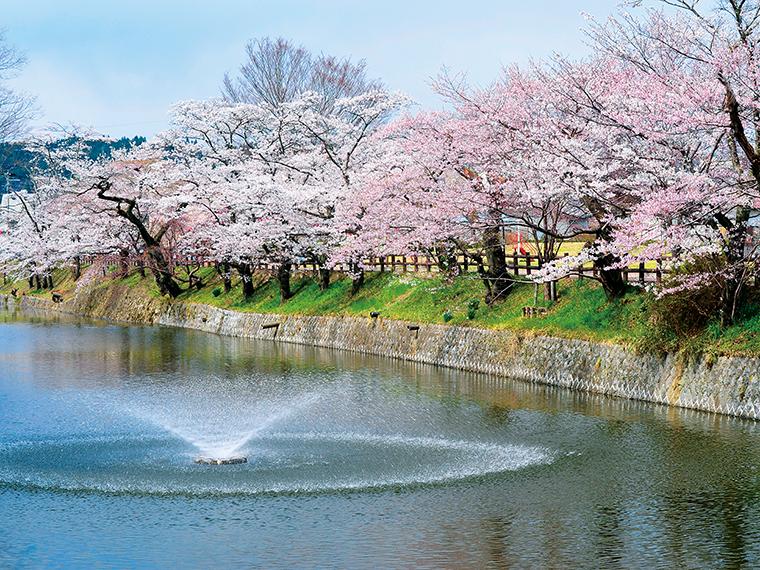 棚倉城跡の桜。春には約500本のソメイヨシノやツツジが咲き誇る