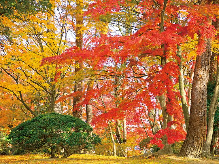 「陣屋の杜公園」。11月中旬には紅葉が鮮やかに彩り、真っ赤なじゅうたんが広がる。落ち着いた雰囲気で心休まるスポット