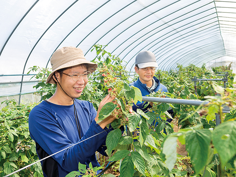 ラズベリーの収穫作業をする矢祭町地域おこし協力隊の大和田さん(左)、長友さん(右)