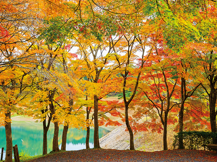 桜、山野草、新緑、紅葉と、四季を通じて楽しめる「半田山自然公園」。沼を囲うように彩る紅葉を楽しめる